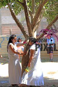 boda-masiva-con-arboles-19